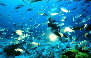 Spectacular sealife in Malta and Gozo
